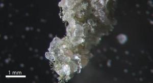 Salt/carbonate aggregate in surface salt pan sediments boundwit