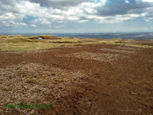 Bare peat and research plots at Holme Moss.